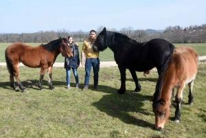 Yssingeaux : l'Elevage des Sucs participe à la valorisation du cheval de race Auvergne