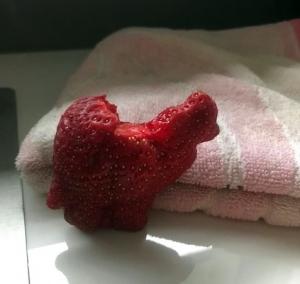 Une fraise à l'allure animale