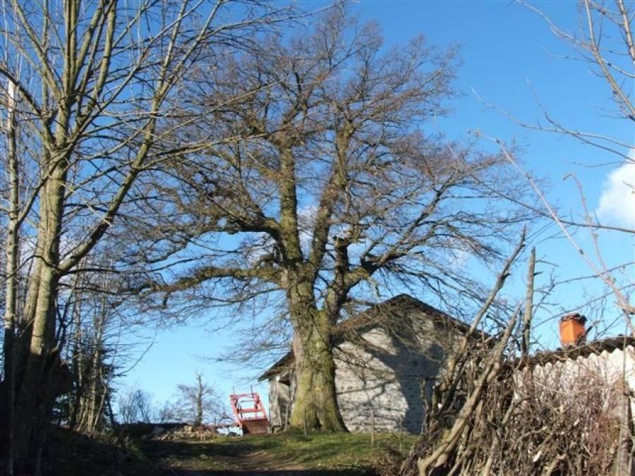 Ce remarquable chêne appartient à la famille Lacombe de Pont-Salomon.