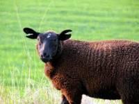 Saint-Julien-Molhesabate : quatre fermes en folie dimanche