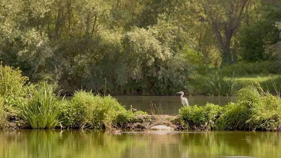 Bas-en-Basset : une diffusion des vidéos des étangs le 14 décembre