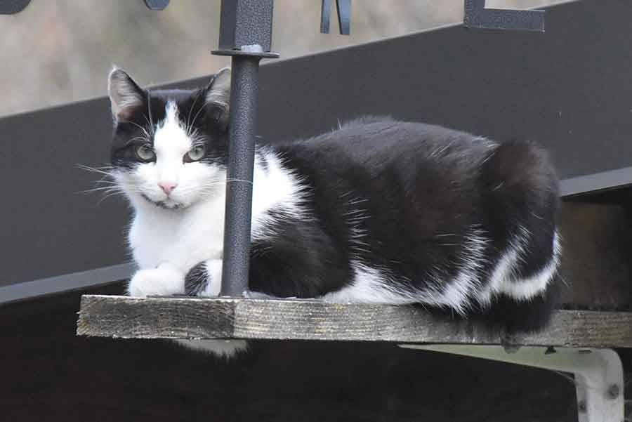 Puy-en-Velay : une campagne de capture et de stérilisation des chats errants va débuter