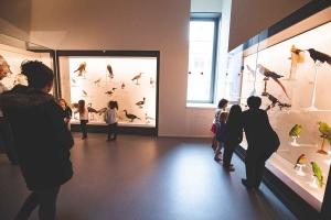 Puy-en-Velay : une semaine de yoga des animaux au Musée Crozatier