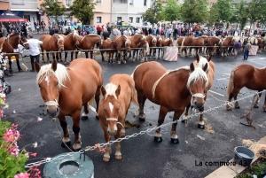 Huit concours de chevaux lourds organisés cet été en Haute-Loire dont la finale à Yssingeaux