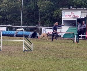 Saint-Ferréol-d'Auroure : une centaine de participants au concours d'agility canine