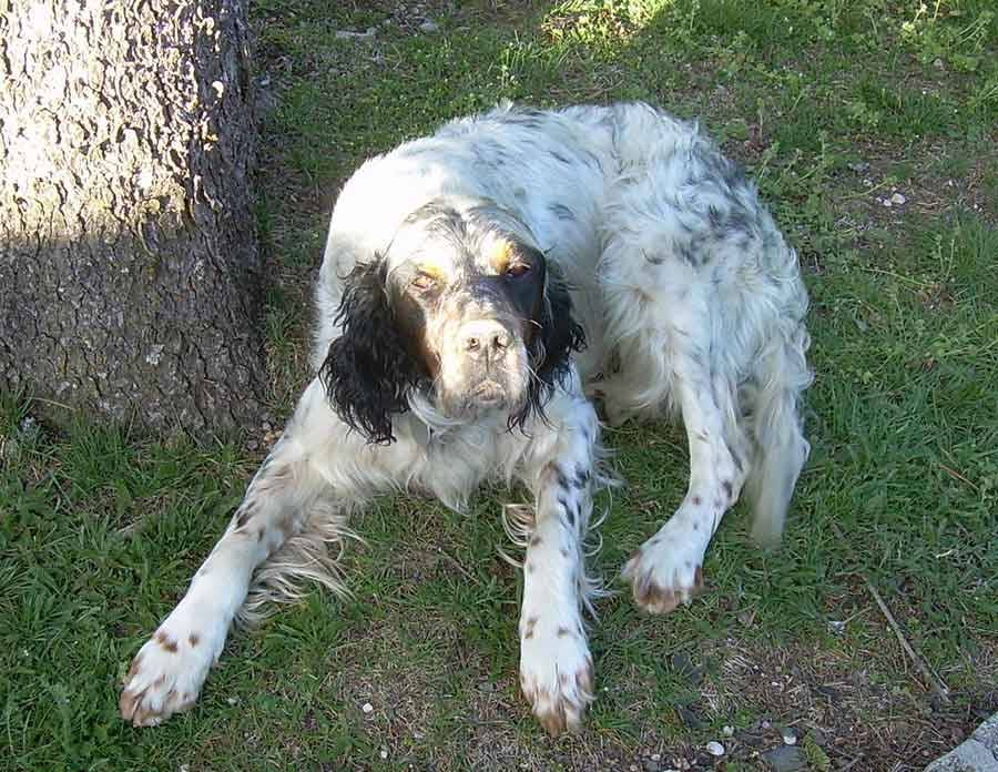 Le Mazet-Saint-Voy : un chien perdu