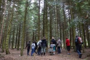 Saint-Pal-de-Mons : une balade pour comprendre la forêt de Haute-Loire