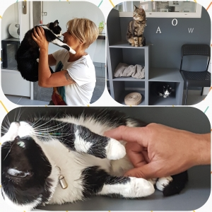 L'Empreinte Féline accueille les chats dans son hôtel pendant les vacances