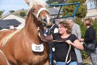 Les Estables : 23 chevaux lourds sélectionnés pour le Sommet de l'élevage à Cournon