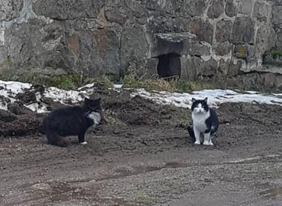 Saint-Jeures : une campagne de stérilisation menée sur les chats du bourg