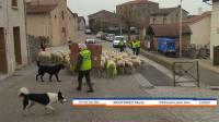 A Malvalette, les moutons en renfort des gilets jaunes (vidéo)