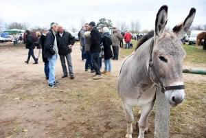 Bas-en-Basset : vous trouverez de tout à la Foire aux ânes le 11 novembre