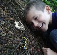 La saison des champignons... et des salamandres