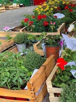 """Monistrol-sur-Loire : fleurs, aromates et plants de légumes vendus pour l'ensemble scolaire du """"Château"""""""