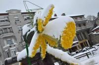 Sur la place de la Fontaine, les décorations composées de jonquilles fraîches ont été recouvertes de neige.