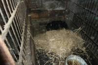 Saint-Julien-Chapteuil : les chiens vivaient dans des cages et dans le noir