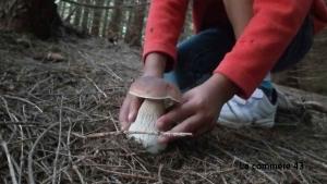 Une conférence sur les champignons au Puy le 28 août