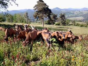 La ferme Fol'Avoine s'agrandit et recrute à Saint-Jeures et Lapte
