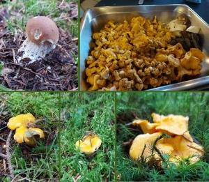 Les champignons font aussi leur rentrée en Haute-Loire