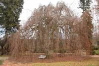 Dans le parc, un hêtre pleureur remarquable a été planté il y a 300 ans.