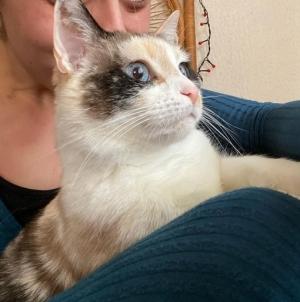 Le Mazet-Saint-Voy : un chat de vacanciers porté disparu