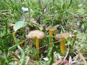 Champimystique organise une première sortie champignons dimanche 13 septembre