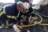 Un chaton blessé dans l'incendie rafraîchi par les pompiers..