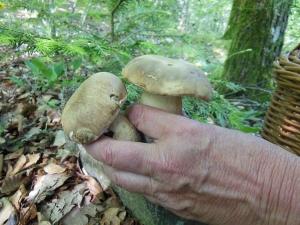 Valprivas : le champignon dans tous ses états