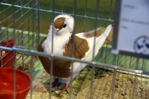 Retournac : de drôles d'oiseaux à voir ce week-end à la Filature