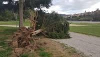 A Aurec-sur-Loire, comme ailleurs, des arbres ont été déracinés.